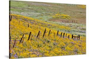 USA, Oregon, Columbia River Gorge, Field Along Dalles Mountain Road by Hollice Looney