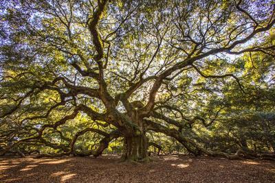 USA, South Carolina, Charleston, Angel Oak