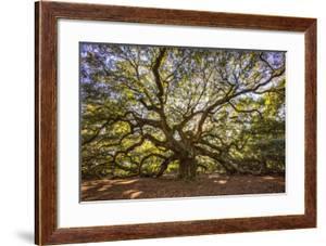 USA, South Carolina, Charleston, Angel Oak by Hollice Looney