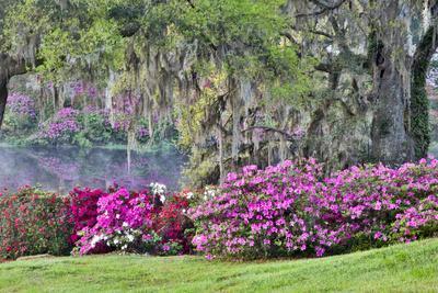 USA, South Carolina, Charleston, Calm Among the Flowers