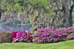 USA, South Carolina, Charleston, Calm Among the Flowers by Hollice Looney