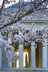 USA, Washington DC, Jefferson Memorial with Cherry Blossoms by Hollice Looney