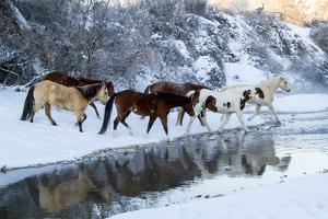 USA, Wyoming, Shell, Horses Crossing the Creek by Hollice Looney