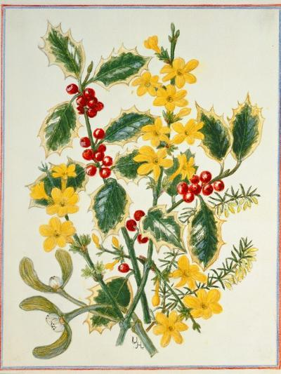 Holly, Winter Jasmine, Heath and Mistletoe-Ursula Hodgson-Giclee Print