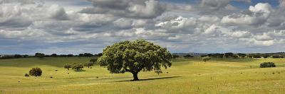 Holm Oaks in the Vast Plains of Alentejo, Portugal-Mauricio Abreu-Photographic Print
