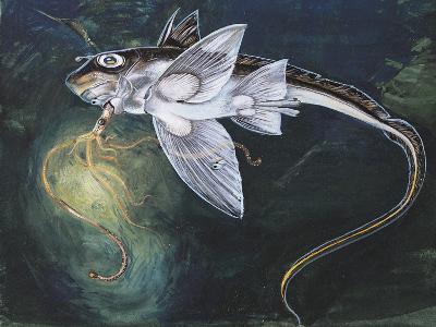 Holocephali Swimming Underwater (Chimaera Monstrosa)--Giclee Print