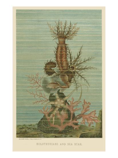 Holothurians and Sea Star--Art Print