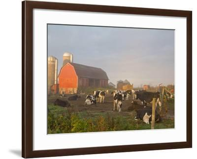 Holstein dairy cows outside a barn, Boyd, Wisconsin, USA-Chuck Haney-Framed Photographic Print