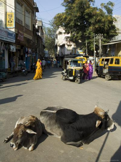 Holy Cows on Streets of Dungarpur, Rajasthan, India-Robert Harding-Photographic Print