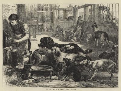 Home for Destitute Dogs--Giclee Print