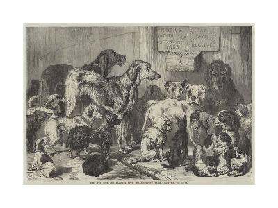Home for Lost and Starving Dogs, Hollingsworth-Street, Islington-Samuel John Carter-Giclee Print