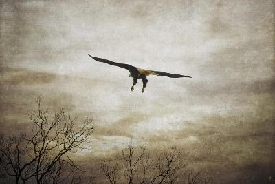 Home Safely Bald Eagle-Jai Johnson-Giclee Print