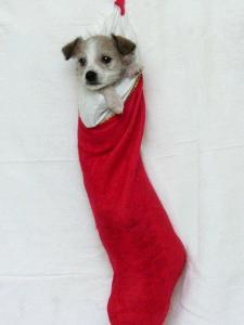 Homeless Puppy, December 2002