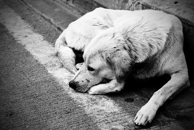 Homeless Stray Dog-Zoom-zoom-Photographic Print
