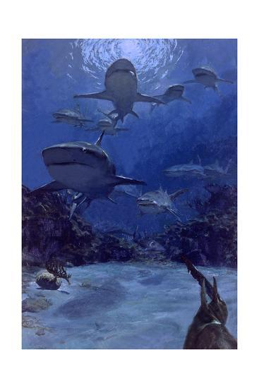 Homing into the Rookery, Dry Bar, 1975: Near the Famous Sleeping Shark Rookery in Dry Bar-Stanley Meltzoff-Giclee Print