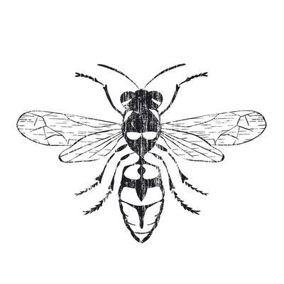 https://imgc.artprintimages.com/img/print/honey-bee_u-l-f561vs0.jpg?p=0