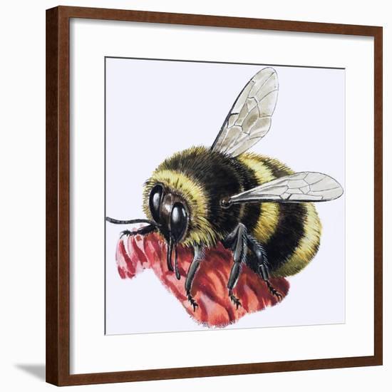 Honey Bee-R^ B^ Davis-Framed Giclee Print