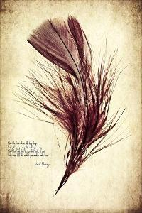 Feather in Color III by Honey Malek
