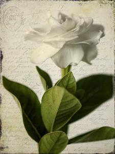Gardenia Grunge I by Honey Malek