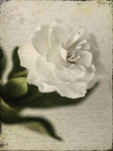 Gardenia Grunge II by Honey Malek