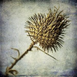 Grunge Remnants II by Honey Malek