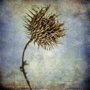 Grunge Remnants V by Honey Malek