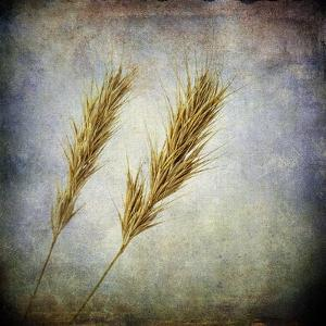 Grunge Remnants VI by Honey Malek