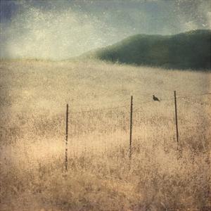 In Country II by Honey Malek