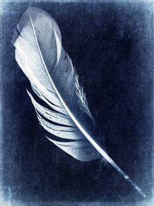 Inverted Feather I by Honey Malek
