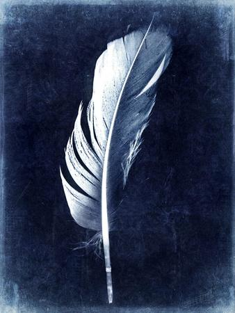Inverted Feather II