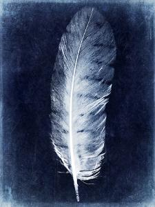 Inverted Feather VI by Honey Malek
