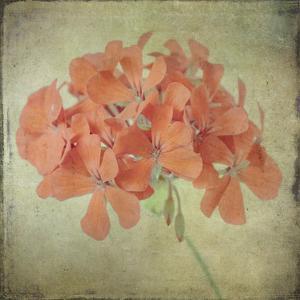 Lush Vintage Florals IX by Honey Malek