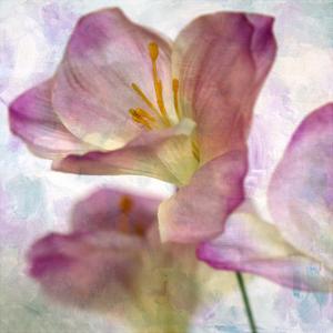 Pink Hyacinth I by Honey Malek