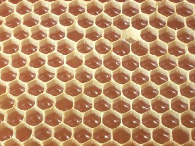 Honeycomb Filled with Honey-Jeff Foott-Photographic Print