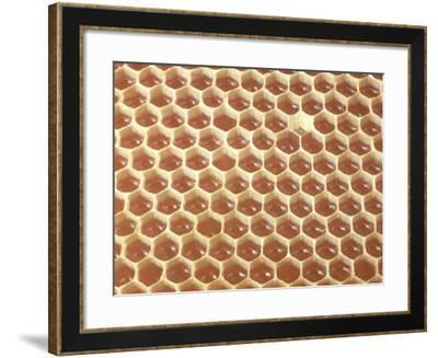 Honeycomb Filled with Honey-Jeff Foott-Framed Photographic Print