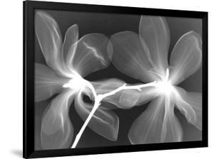 Magnolia I by Hong Pham