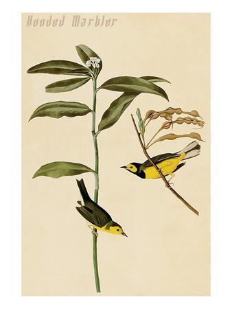 Hooded Warbler-John James Audubon-Art Print