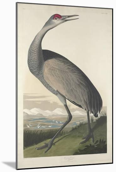 Hooping Crane, 1835-John James Audubon-Mounted Premium Giclee Print