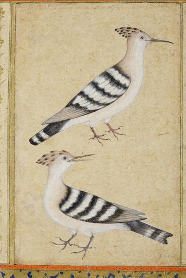 Hoopoes, C.1590--Giclee Print