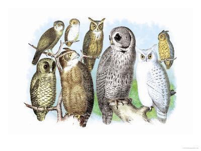 Hoot of Owls-Theodore Jasper-Art Print