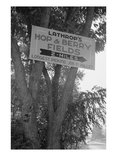 Hop and Berry Fields-Dorothea Lange-Art Print