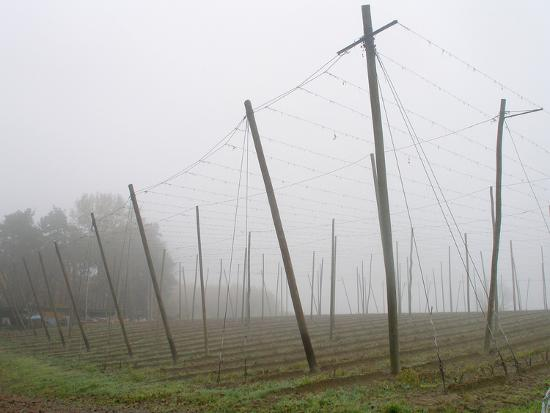 Hop Garden in the Hallertau, Autumn, Fog-Harald Kroiss-Photographic Print