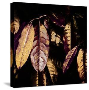 Leaves 3 by Hope Bainbridge