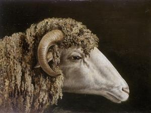 Etude pour une tête de bélier by Horace Vernet