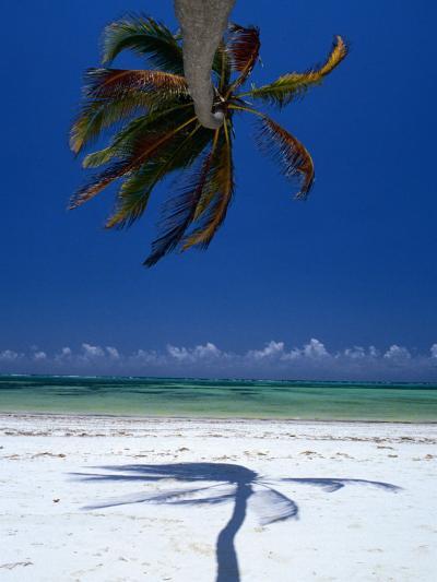 Horizontal Palm Tree and Its Shadow on White-Sand Bweju Beach, Zanzibar, Tanzania-Greg Elms-Photographic Print