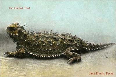 Horned Toad, Fort Davis--Art Print