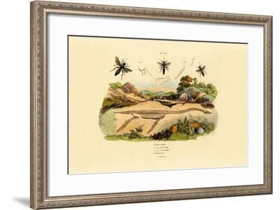 Hornet, 1833-39--Framed Giclee Print