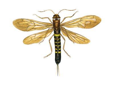 https://imgc.artprintimages.com/img/print/horntail-tremex-columba-insects_u-l-q135jdw0.jpg?p=0