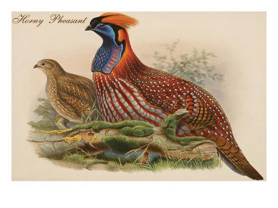 Horny Pheasant-John Gould-Art Print