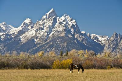 Horse and Grand Tetons, Moose Head Ranch, Grand Teton National Park, Wyoming, USA-Michel Hersen-Photographic Print
